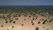 Contra desertificação, África planta 'muralha de árvores' de 8 mil km