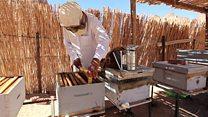 مصر: صناعة العسل في جبال جنوب سيناء