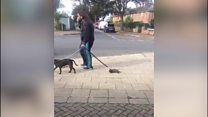 Man fined for dragging puppy along road