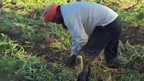 ઇટલીમાં ફસાયેલા ભારતીય ખેડૂતોની વ્યથા