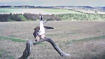 Kestrel hangs on during windy weather