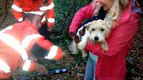 Dog gets stuck in badger sett