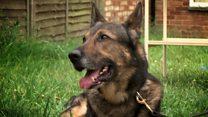 'Hero' dog returns to knife attack scene