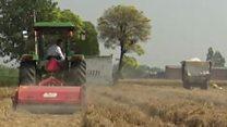 पंजाब के किसान बता रहे हैं पराली समस्या का हल