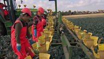 किसान नहीं अब रोबोट करेंगे खेतों में काम