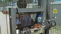 پایان مهلت دولت استرالیا برای تعطیلی اردوگاه مانوس