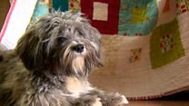 Dog helps teen's terror attack trauma