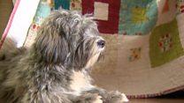 Собака вместо врача: как пес помогает бороться с паническими атаками?