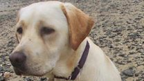 Search on for missing £20k training dog