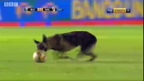 Dog wey carry force join football match for Bolivia