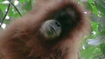 """اكتشاف فصيلة جديدة من """"إنسان الغاب"""""""