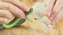 'I inject myself with snake venom'
