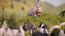 Poles told to breed 'like rabbits'