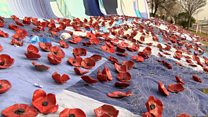 Poppy waterfall marks Remembrance Day