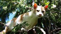 고양이 구조대의 맹활약