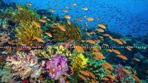 ¿Sabes cómo suena un arrecife de coral?