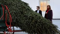 First Lady gets Christmas tree delivery