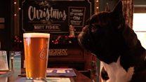 Britain's most dog friendly pub
