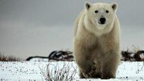 Should UK appoint Arctic ambassador?