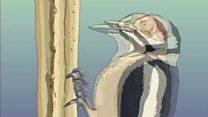 El secreto de los pájaros carpintero para evitar el peor dolor de cabeza