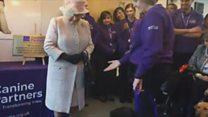 Labrador drops Queen's posy