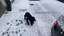 The excitement of a puppy seeing snow for the first time