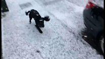 雪! 初めての雪! 子犬おおはしゃぎ