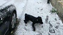 فرحة كلب يرى الثلوج لأول مرة