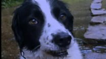 How to protect dogs from Alabama Rot