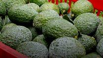 Авокадо-армия: как в Мексике с оружием защищают урожай