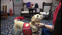 Assistance dogs are 'our independence'