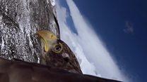 نسر يحلق فوق اسكتنلندا