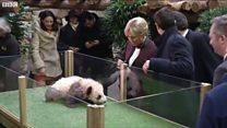 Встреча первой леди и первой панды Франции
