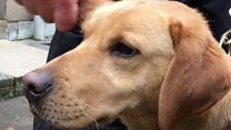 Police dogs named top of the class