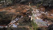Небезпечне сусідство: чи вмирають діти в Нігерії від нафти?