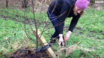 Park life: Glasgow's east end orchard