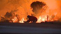 Homem resgata coelho de incêndio na Califórnia