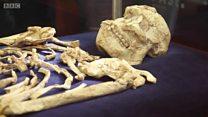 ลิตเติลฟุต บรรพบุรุษมนุษย์ที่เก่าแก่ที่สุดในโลก?