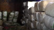 Greece's largest seizure of cannabis