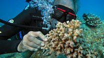 The 'Godfather of Coral' who's still diving at 72