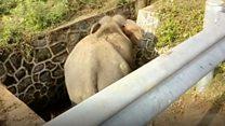 শ্রীলংকায় নর্দমায় পড়ে যাওয়া হাতিকে যেভাবে তোলা হল