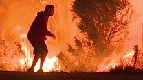 आगीपासून जीव वाचवण्यासाठी सश्याची केविलवाणी धडपड