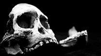 """""""Маленькая Нога"""": древнейший скелет человеческого предка"""