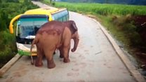 Elephant attacks a bus