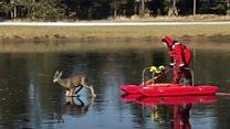 氷上で動けなくなった「バンビ」 消防員が救出