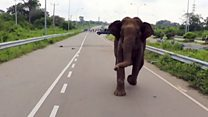 Elephant mother charges her baby's rescuers