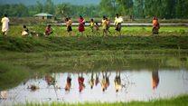 بررسی وضعیت مسلمانان میانمار توسط دو نهاد بینالمللی