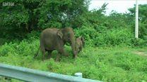 엄마 코끼리는 왜 차를 쫓아갔을까?