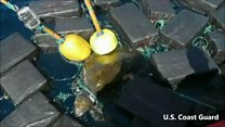 Sea turtle found tangled in drugs hoard