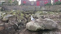 Dive-bombing gull rehomed
